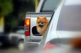 Healthy-image-dog-in-car