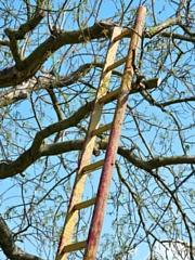 Home-ladder-safety-tips