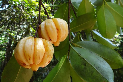 Garcinia Cambogia Best Weight Loss Supplement